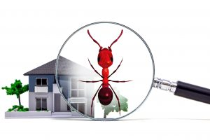 New Jersey Termite Inspector | Your Home Inspector, LLC
