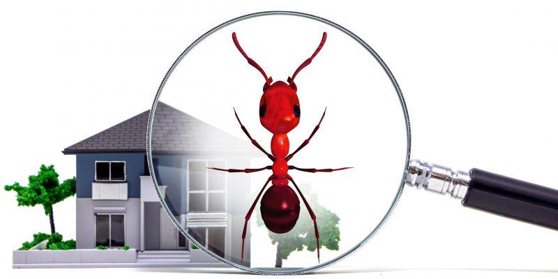 bergen county nj termite inspections
